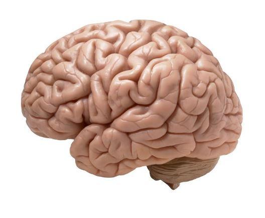 Aby mózg żył długo i szczęśliwie