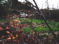 Jesienne przycinanie drzew i krzewów