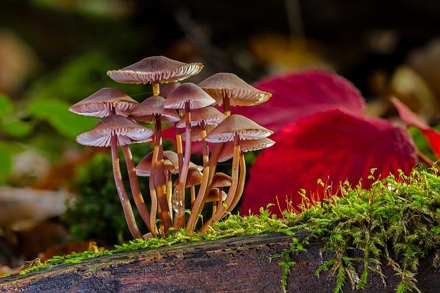 mushrooms-2817729_640