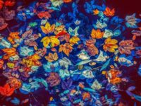 fall-leaves-3744649_640